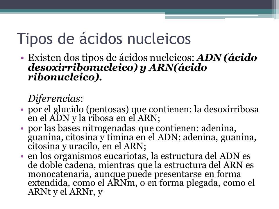 Tipos de ácidos nucleicos