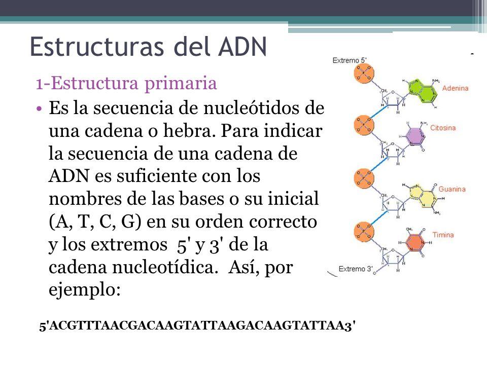 Estructuras del ADN 1-Estructura primaria