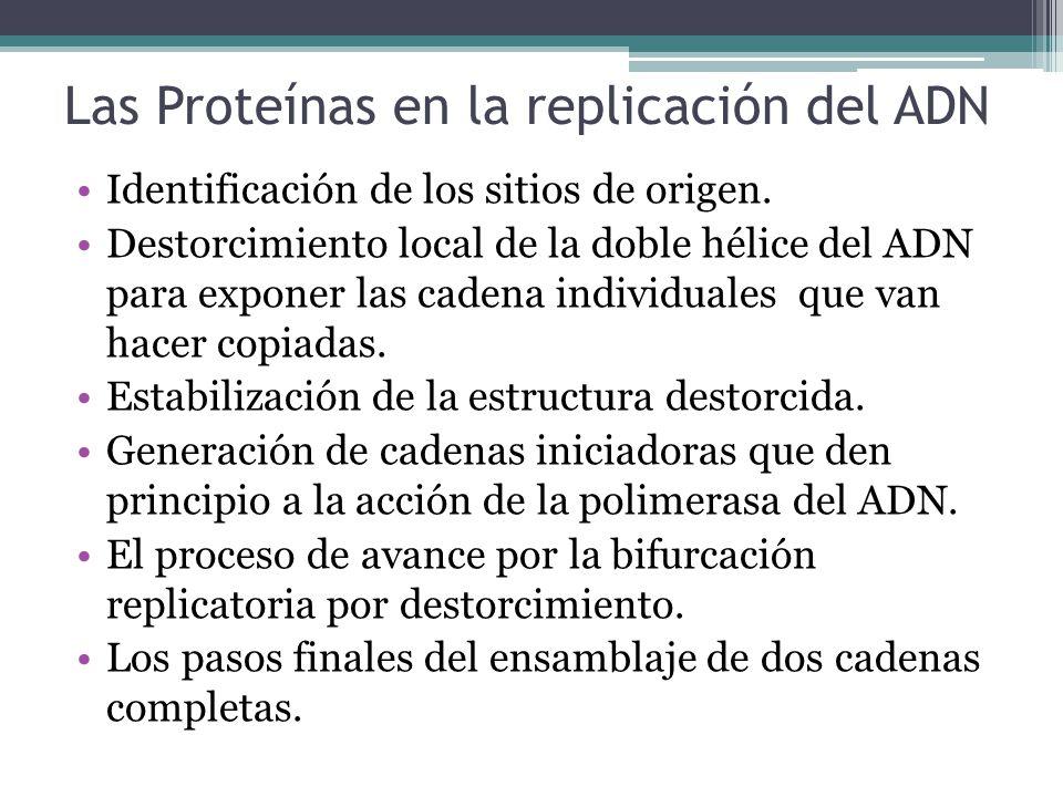 Las Proteínas en la replicación del ADN