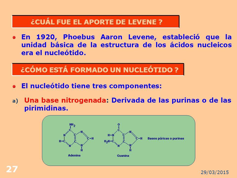 ¿CUÁL FUE EL APORTE DE LEVENE ¿CÓMO ESTÁ FORMADO UN NUCLEÓTIDO