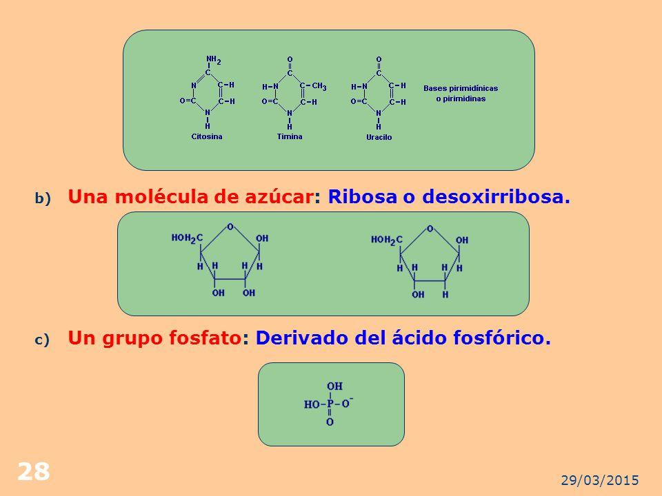 Una molécula de azúcar: Ribosa o desoxirribosa.