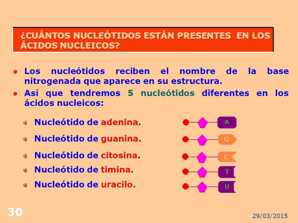 ¿CUÁNTOS NUCLEÓTIDOS ESTÁN PRESENTES EN LOS ÁCIDOS NUCLEICOS