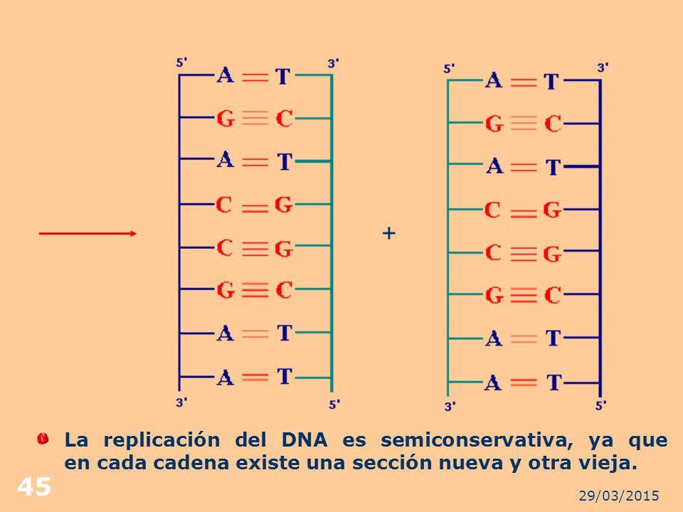 La replicación del DNA es semiconservativa, ya que