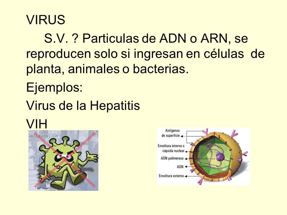 VIRUS S.V. Particulas de ADN o ARN, se reproducen solo si ingresan en células de planta, animales o bacterias.
