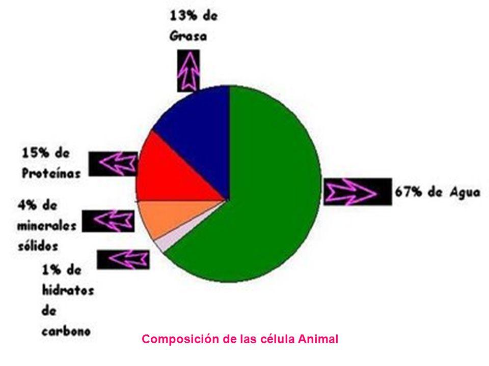 Composición de las célula Animal