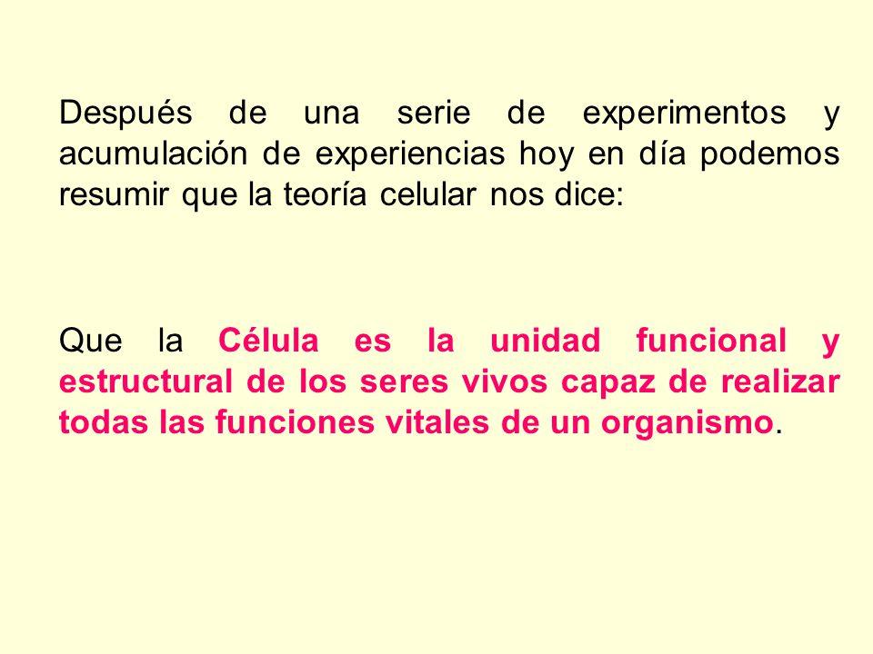 Después de una serie de experimentos y acumulación de experiencias hoy en día podemos resumir que la teoría celular nos dice:
