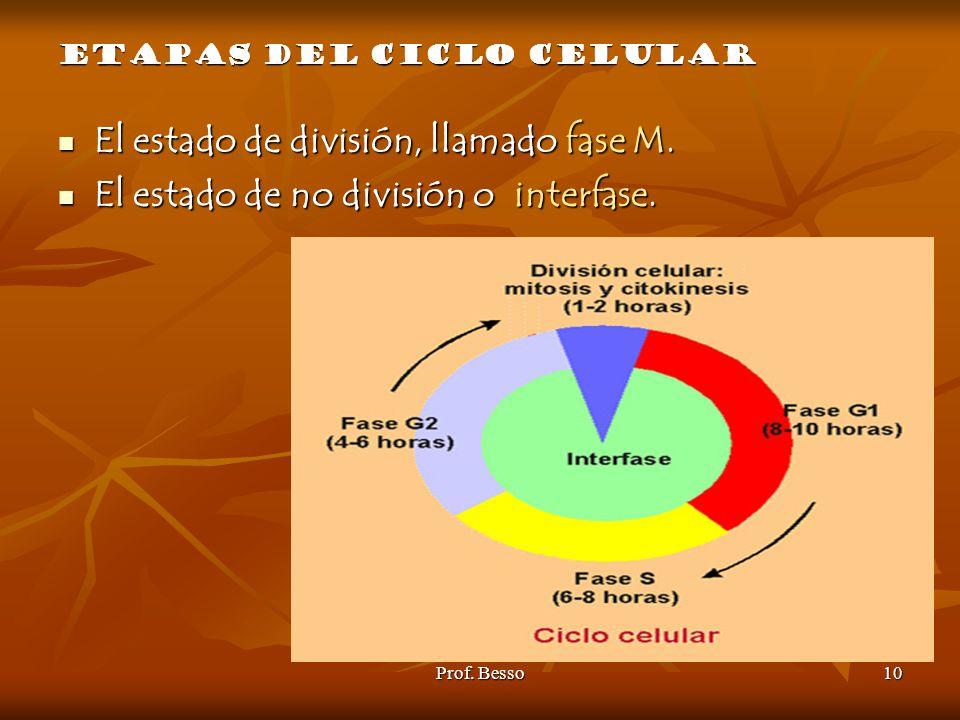 El estado de división, llamado fase M.