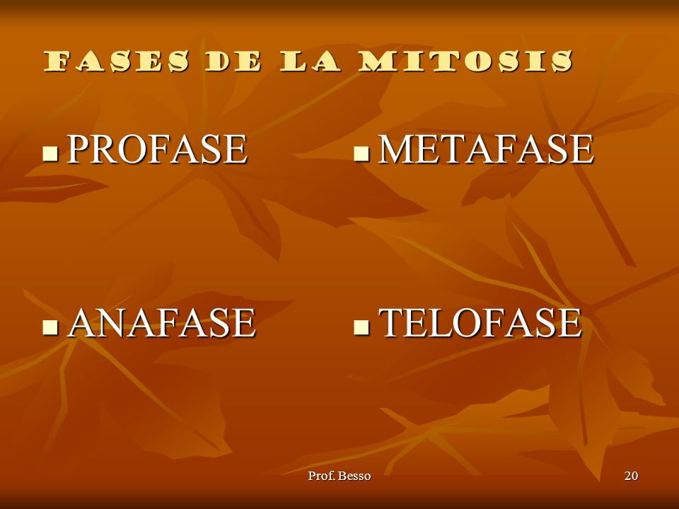 FASES DE LA MITOSIS PROFASE METAFASE ANAFASE TELOFASE Prof. Besso