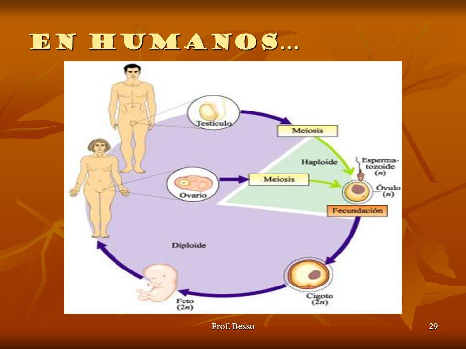 En humanos… Prof. Besso