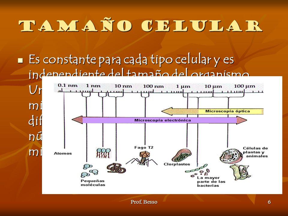 Tamaño celular