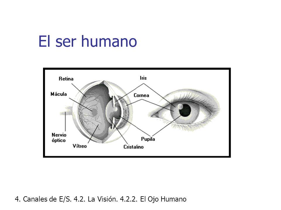 El ser humano 4. Canales de E/S. 4.2. La Visión. 4.2.2. El Ojo Humano