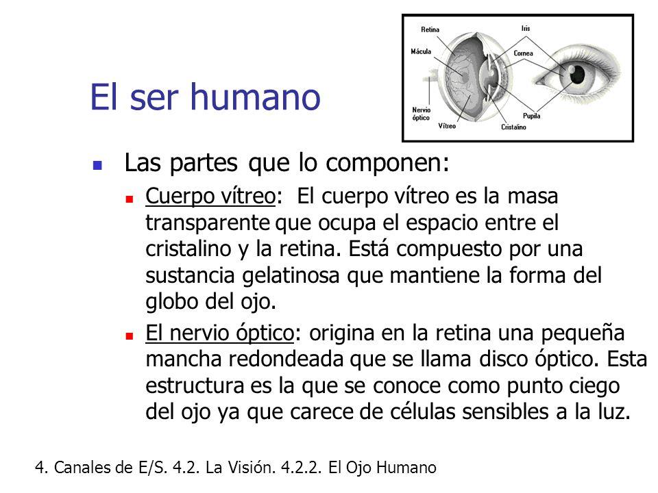 El ser humano Las partes que lo componen: