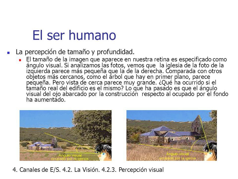 El ser humano La percepción de tamaño y profundidad.