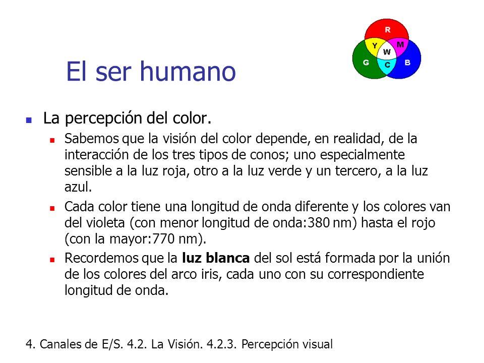 El ser humano La percepción del color.