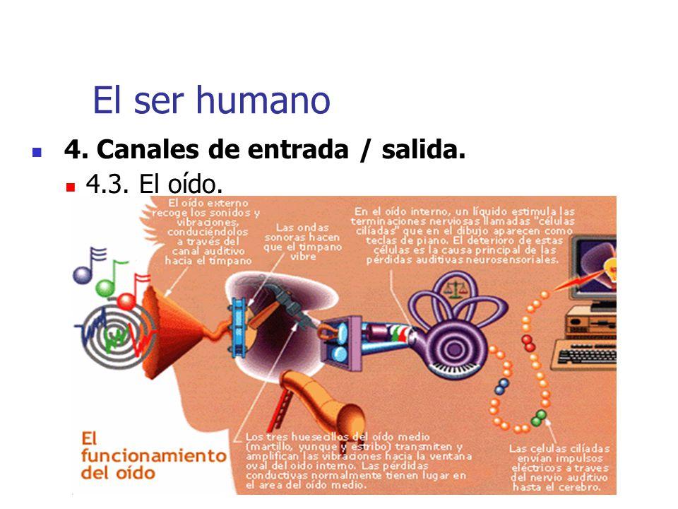 El ser humano 4. Canales de entrada / salida. 4.3. El oído.