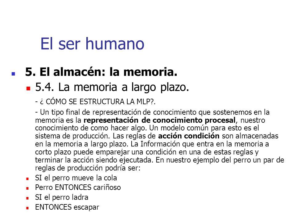 El ser humano 5.4. La memoria a largo plazo.