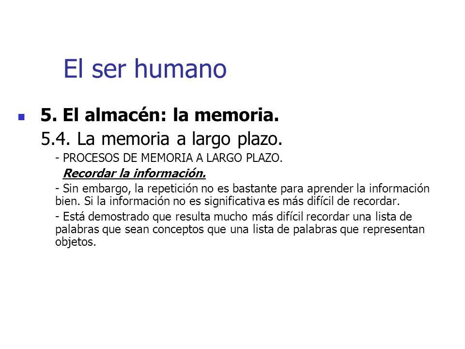 El ser humano 5. El almacén: la memoria.