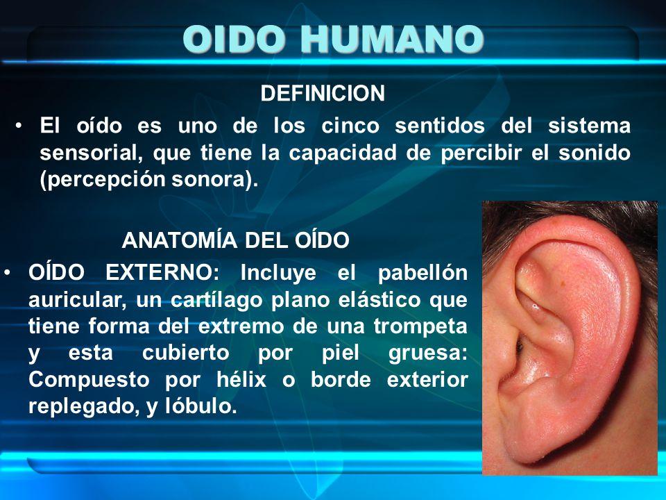 OIDO HUMANO DEFINICION