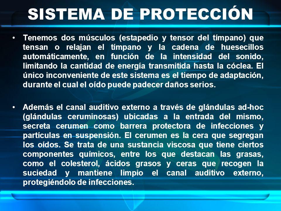 SISTEMA DE PROTECCIÓN