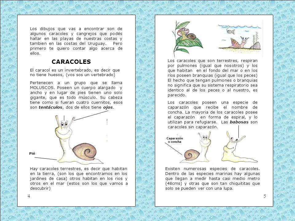 Los dibujos que vas a encontrar son de algunos caracoles y cangrejos que podés hallar en las playas de nuestras costas y tambien en las costas del Uruguay. Pero primero te quiero contar algo acerca de ellos.