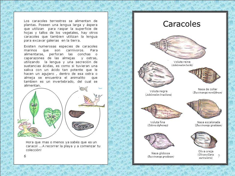 Los caracoles terrestres se alimentan de plantas