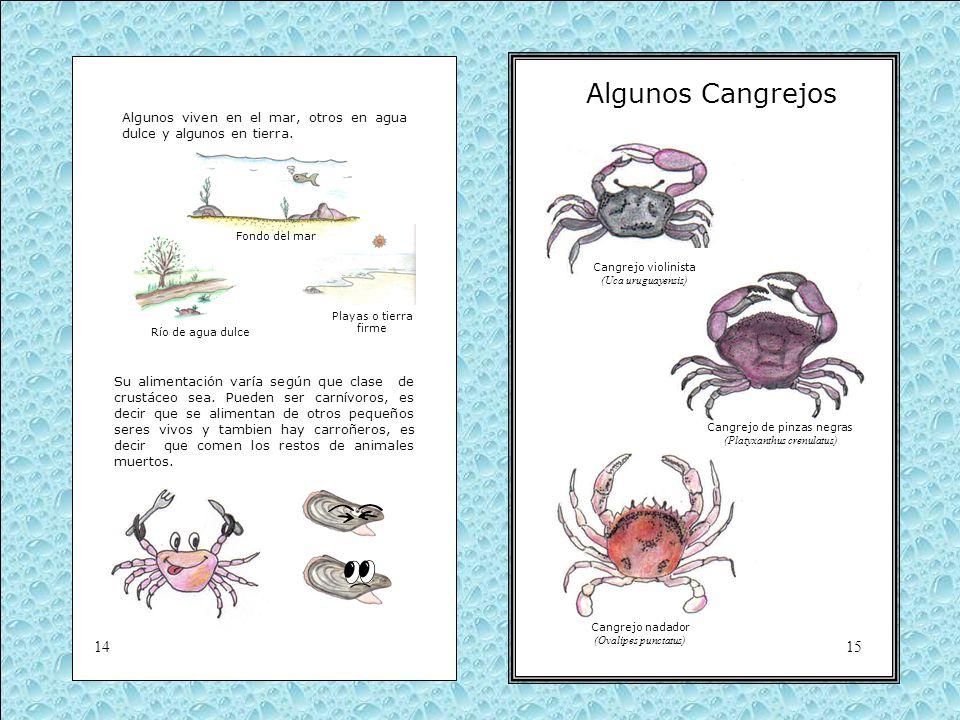 Algunos Cangrejos Algunos viven en el mar, otros en agua dulce y algunos en tierra. Fondo del mar.