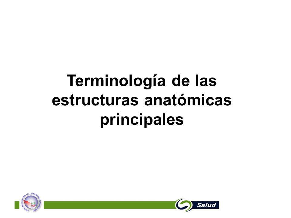 Terminología de las estructuras anatómicas principales
