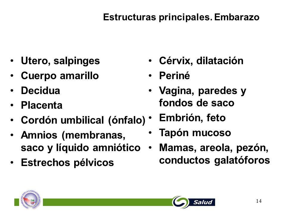 Estructuras principales. Embarazo
