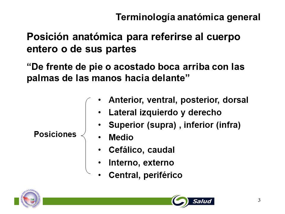 Posición anatómica para referirse al cuerpo entero o de sus partes