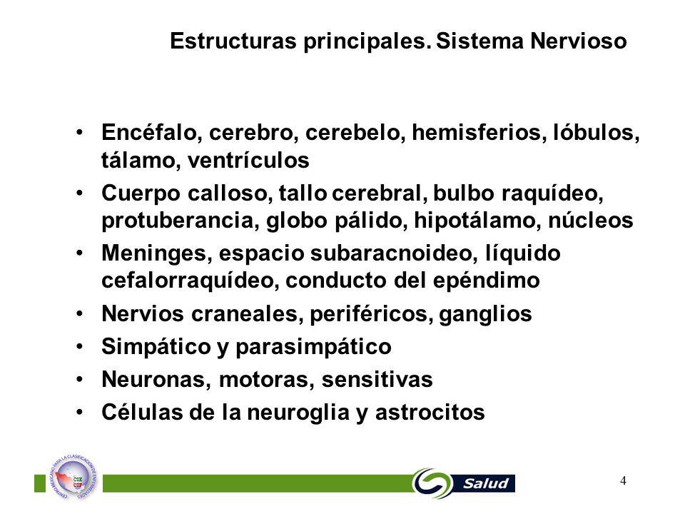 Estructuras principales. Sistema Nervioso