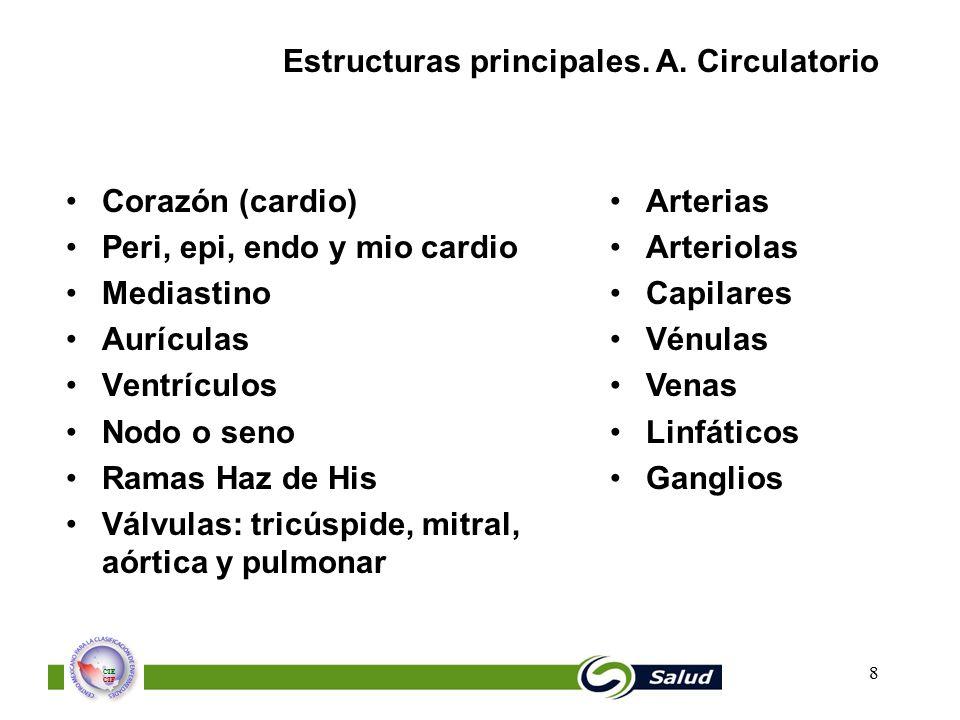 Estructuras principales. A. Circulatorio