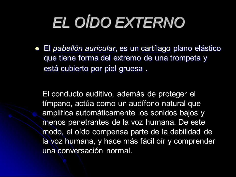 EL OÍDO EXTERNO El pabellón auricular, es un cartílago plano elástico que tiene forma del extremo de una trompeta y está cubierto por piel gruesa .