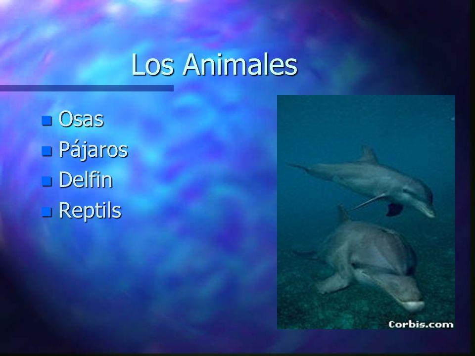 Los Animales Osas Pájaros Delfin Reptils
