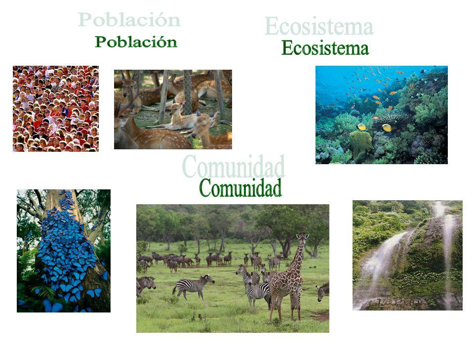 Población Ecosistema Comunidad