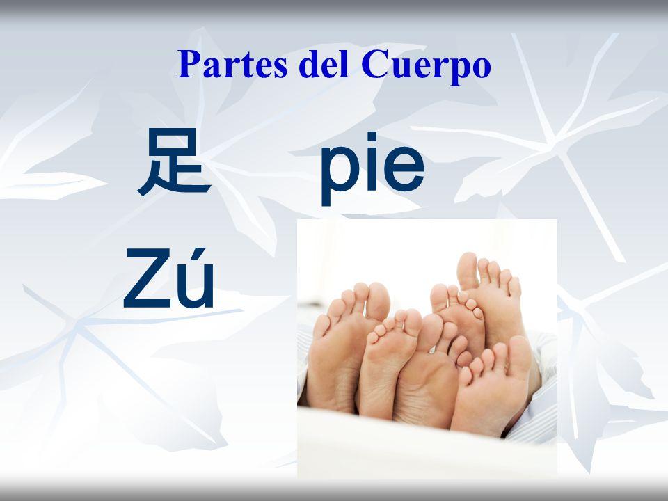 Partes del Cuerpo 足 pie Zú