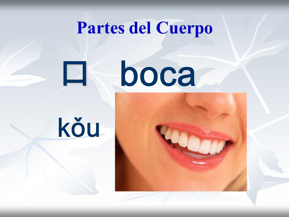 Partes del Cuerpo 口 boca kǒu