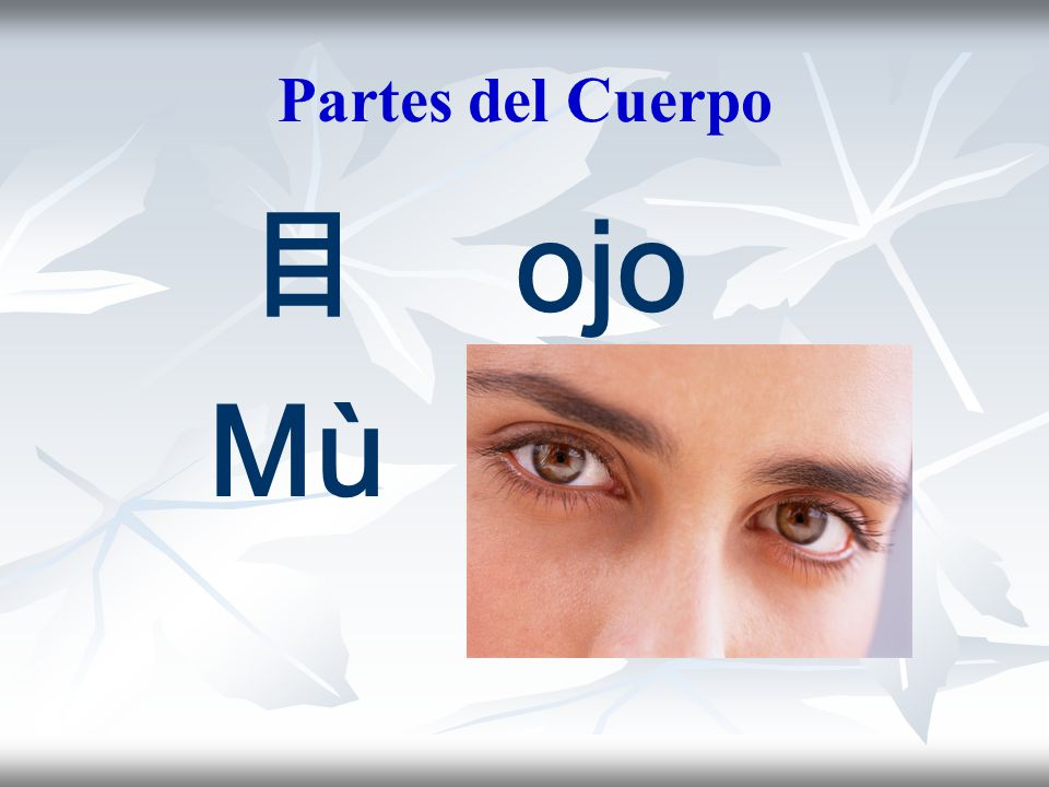Partes del Cuerpo 目 ojo Mù