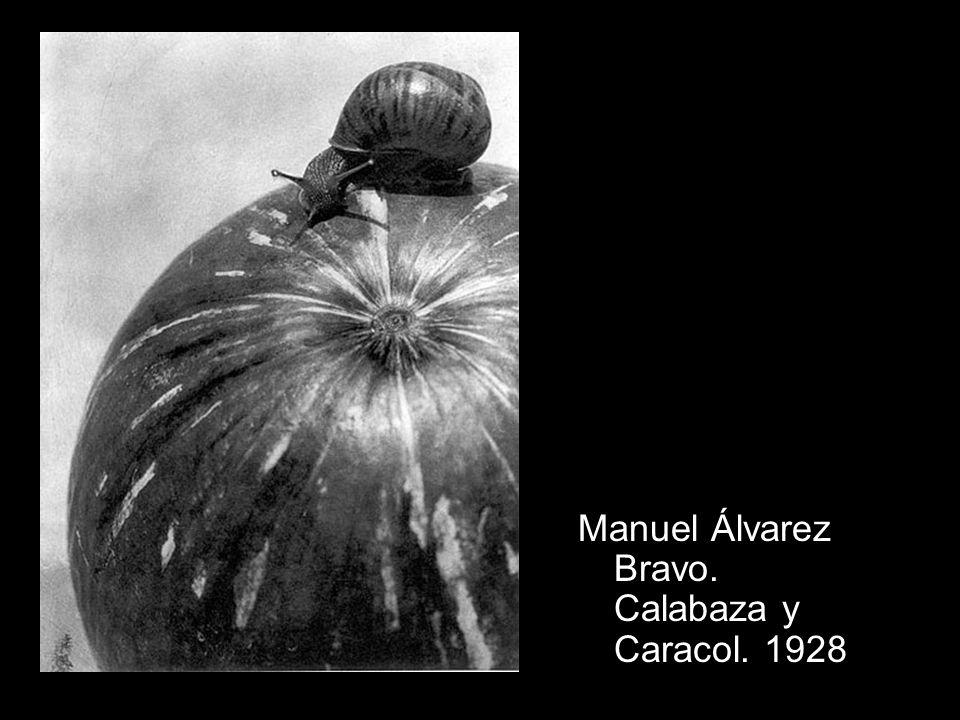 Manuel Álvarez Bravo. Calabaza y Caracol. 1928