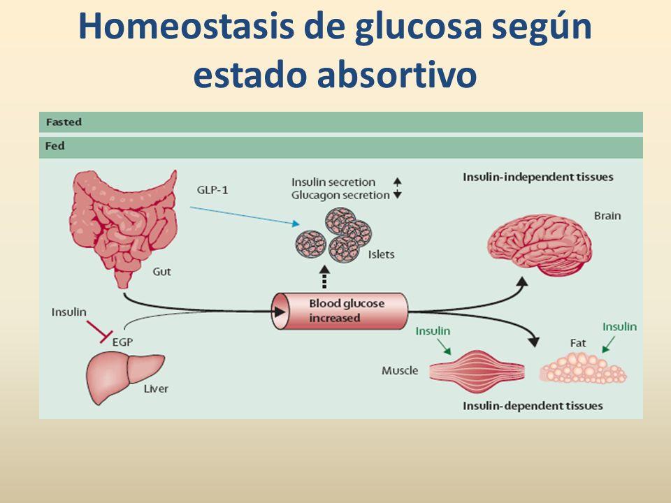 Homeostasis de glucosa según estado absortivo