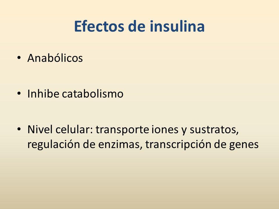 Efectos de insulina Anabólicos Inhibe catabolismo