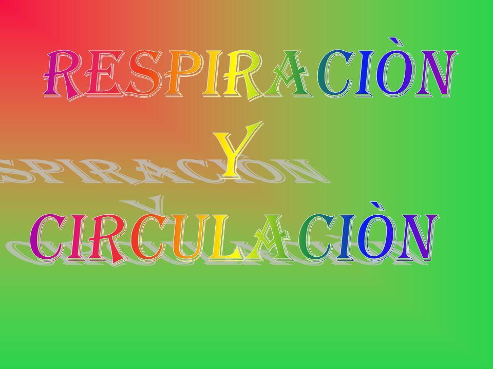 RESPIRACIÒN Y CIRCULACIÒN
