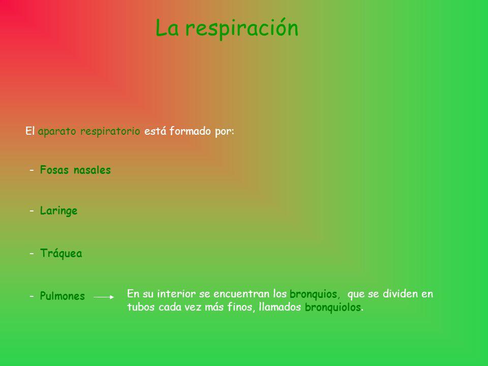 La respiración El aparato respiratorio está formado por: