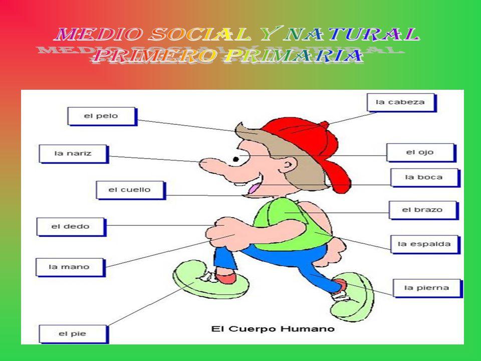 MEDIO SOCIAL Y NATURAL PRIMERO PRIMARIA