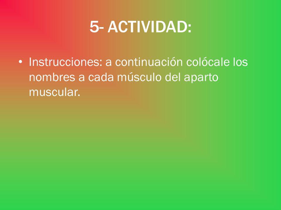 5- ACTIVIDAD: Instrucciones: a continuación colócale los nombres a cada músculo del aparto muscular.