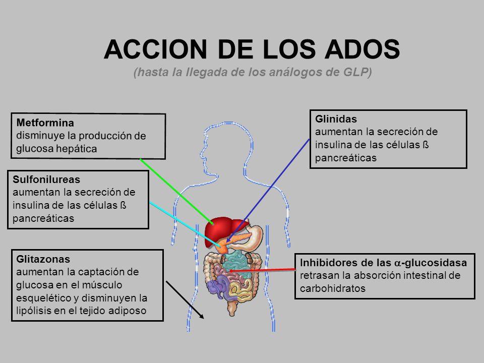 ACCION DE LOS ADOS (hasta la llegada de los análogos de GLP)