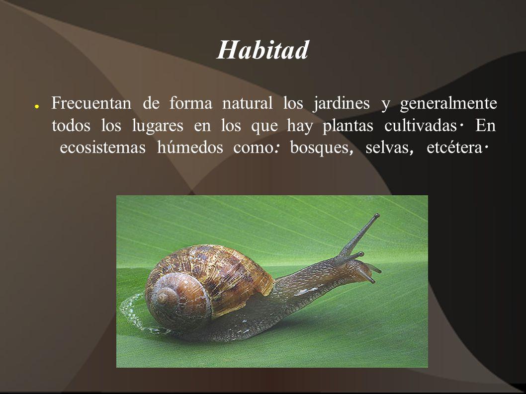 Habitad