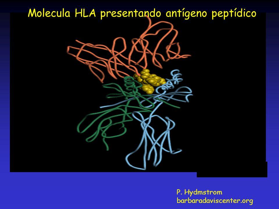 Molecula HLA presentando antígeno peptídico