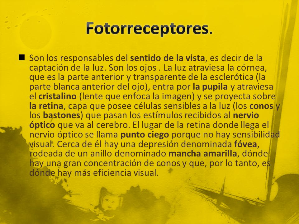 Fotorreceptores.