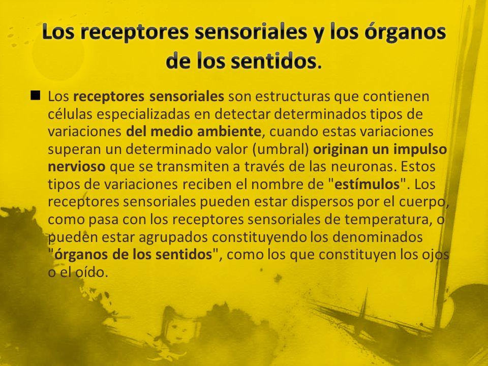 Los receptores sensoriales y los órganos de los sentidos.