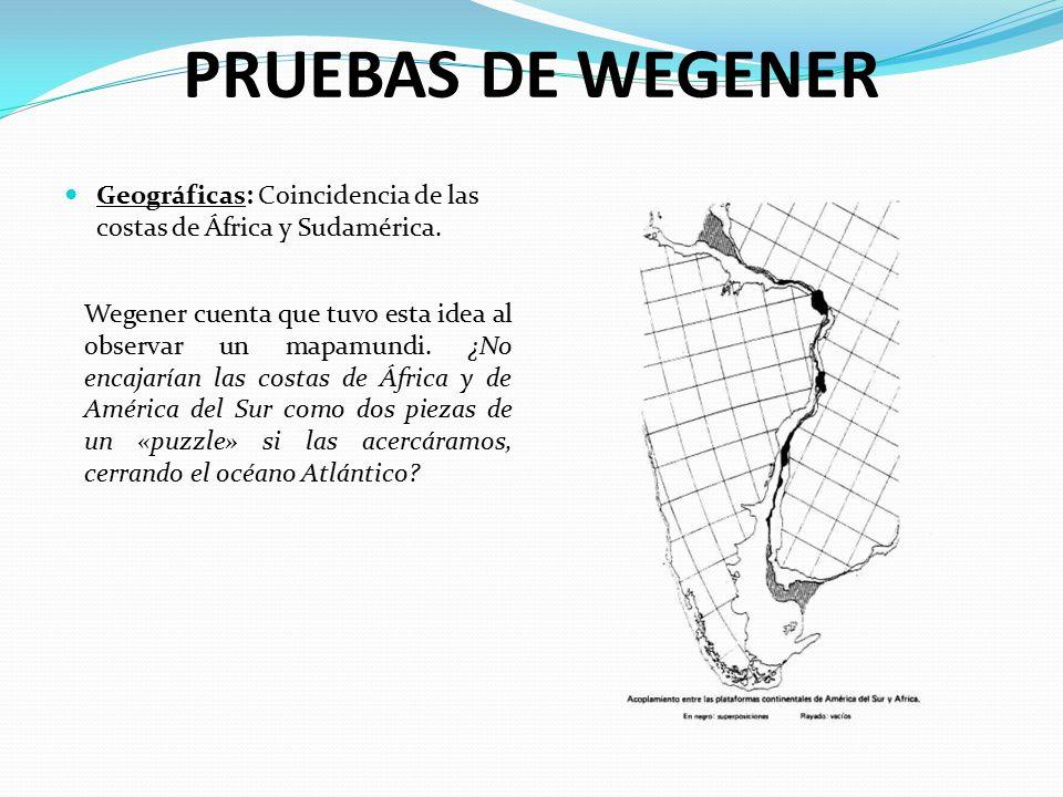 PRUEBAS DE WEGENER Geográficas: Coincidencia de las costas de África y Sudamérica.